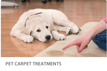 pet-carpet-treatments-btn2